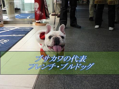 2016_01_15_小型犬-人気5位-フレンチ_ブルドッグ