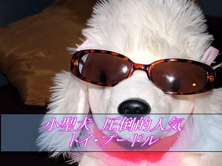 2016_01_15_小型犬-人気1位-トイ_プードル
