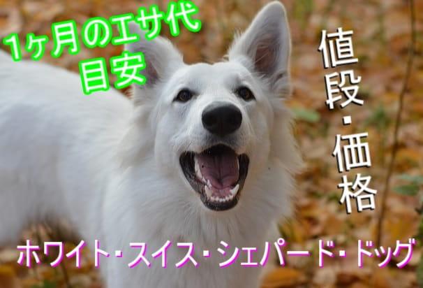 ホワイト・スイス・シェパード・ドッグ-1ヶ月のエサ代