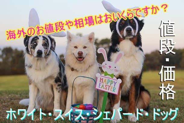 ホワイト・スイス・シェパード・ドッグ-海外-子犬-値段・相場
