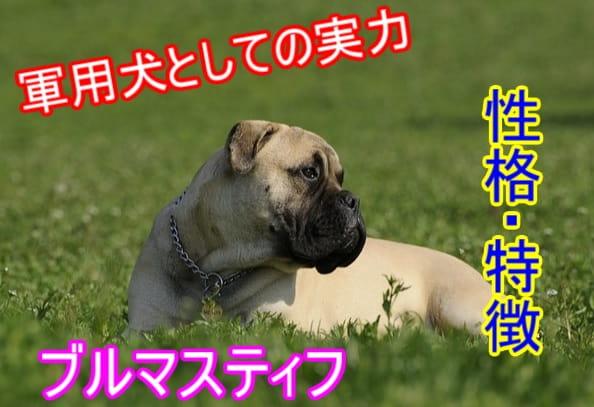 ブルマスティフ・軍用犬・性格・特徴