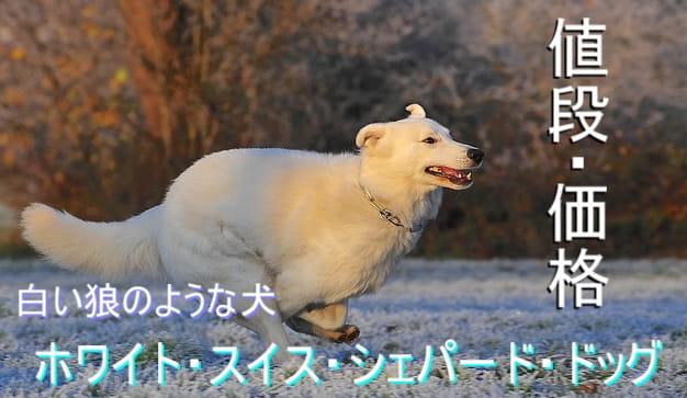 ホワイト・スイス・シェパード・ドッグ・毛色・値段・価格