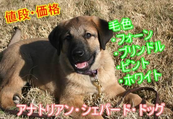 アナトリアン・シェパード・ドッグ・毛色・値段