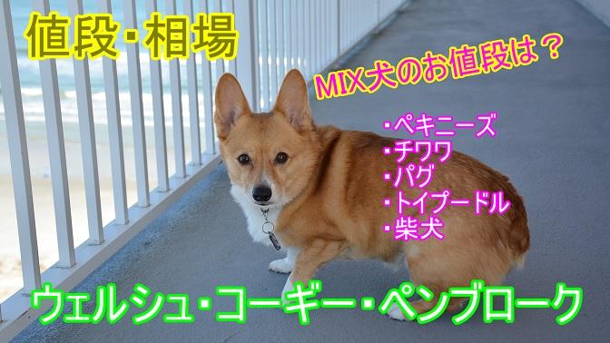 ウェルシュ・コーギー・ペンブローク・ミックス犬・値段・価格・相場