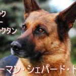 ジャーマン・シェパード・ドッグ-毛色・値段・価格