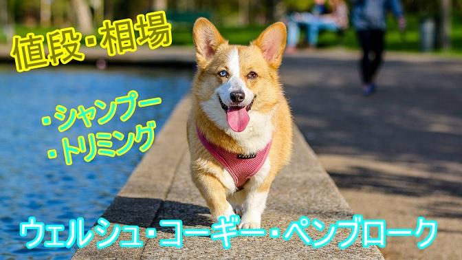 ウェルシュ・コーギー・ペンブローク・シャンプー・トリミング・料金・相場