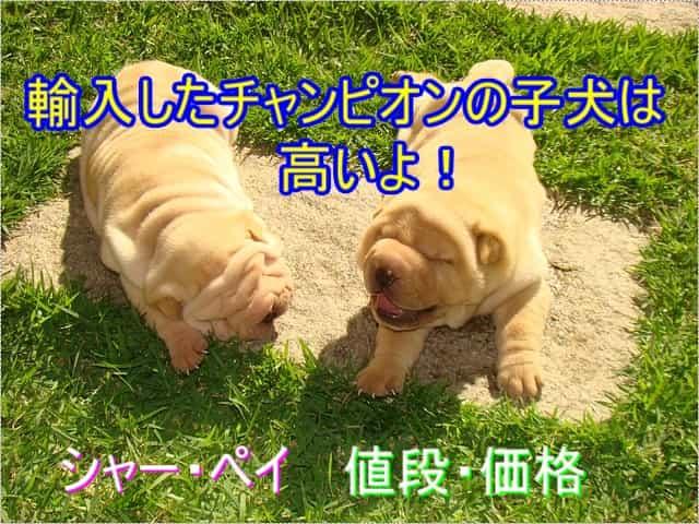 シャーペイ・輸入・チャンピオン・子犬・値段