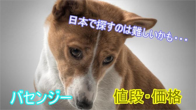 バセンジー-飼育頭数少ない-日本