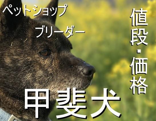 甲斐犬-ブリーダー-ペットショップ-値段-価格