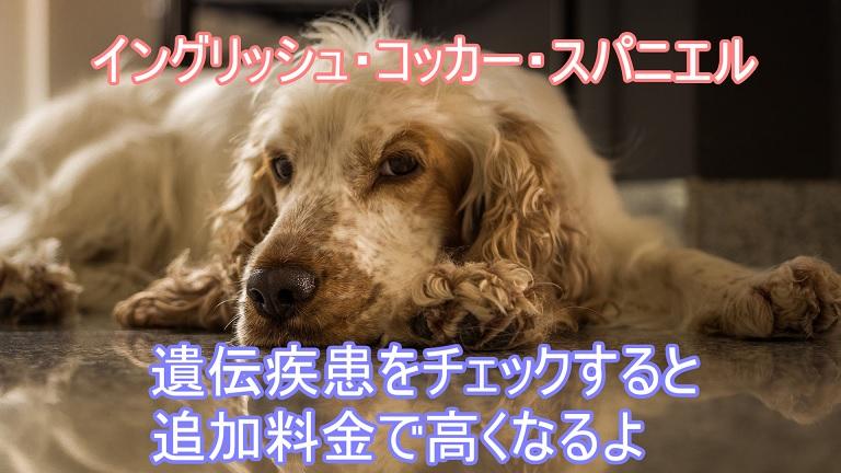 イングリッシュ・コッカー・スパニエル-遺伝疾患-検査費