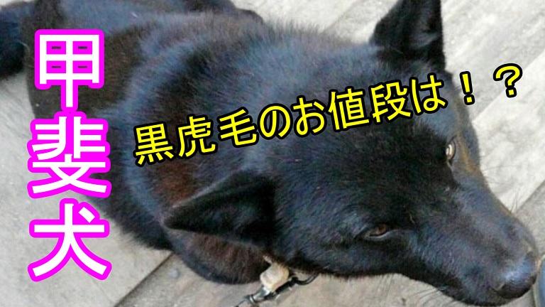 甲斐犬-黒虎毛-値段-価格