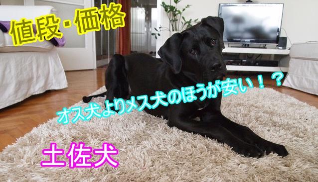 土佐犬・安い・メス