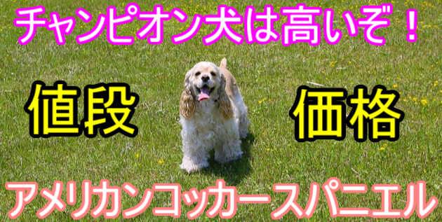 アメリカンコッカースパニエル・チャンピオン・子犬・価格・高い
