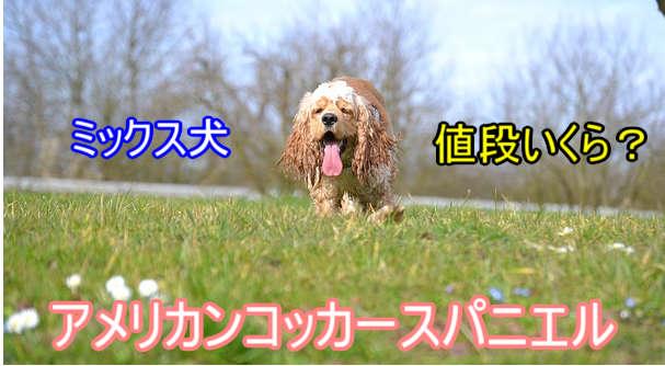 アメリカンコッカースパニエル・ミックス犬・値段