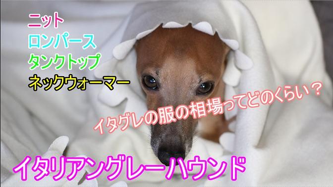 イタリアングレーハウンド-犬用の服-値段-相場