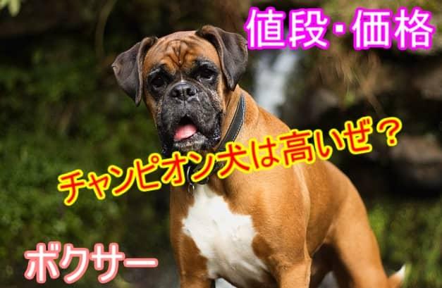 ボクサー・チャンピオン犬・値段・価格