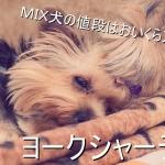 ヨークシャーテリア-ヨーキー-ミックス犬-値段-価格