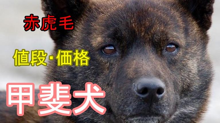 甲斐犬-赤虎毛-値段-価格
