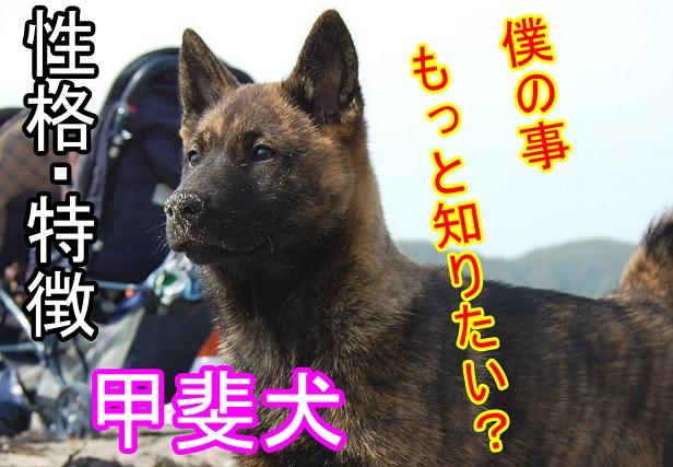 甲斐犬-性格-特徴-まとめ