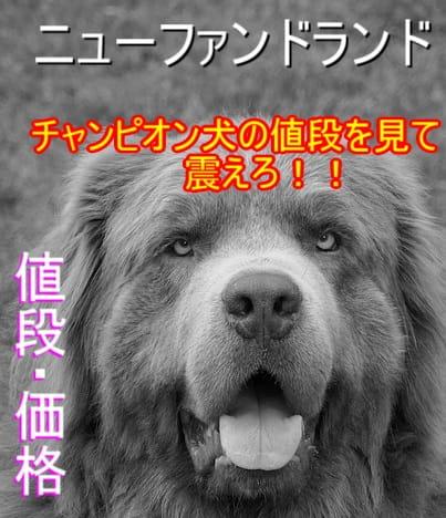 ニューファンドランド・チャンピオン犬・値段・高価