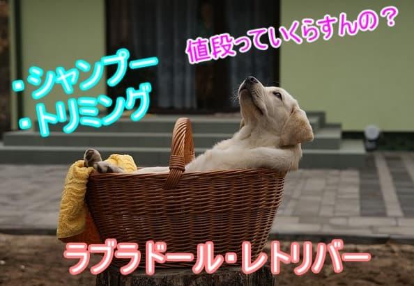 ラブラドールレトリバー・シャンプー・トリミング・料金