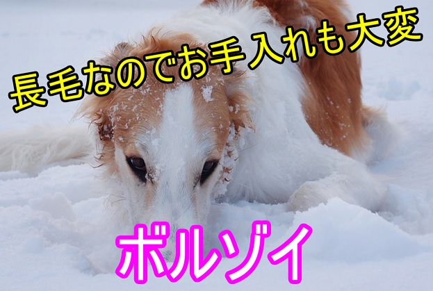 ボルゾイ-毛-トリミング-シャンプー-料金