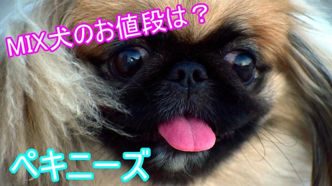 ペキニーズ-ミックス犬-値段
