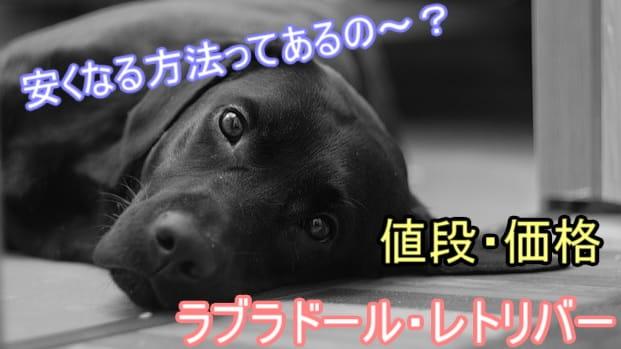 ラブラドールレトリバー・安い値段・里親・成犬