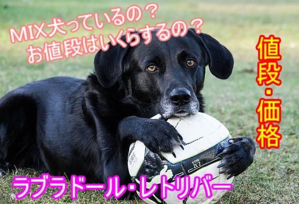 ラブラドールレトリバー・ミックス犬・値段・価格・種類