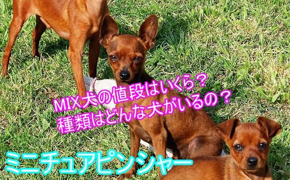 ミニチュアピンシャー-ミックス犬-値段-種類