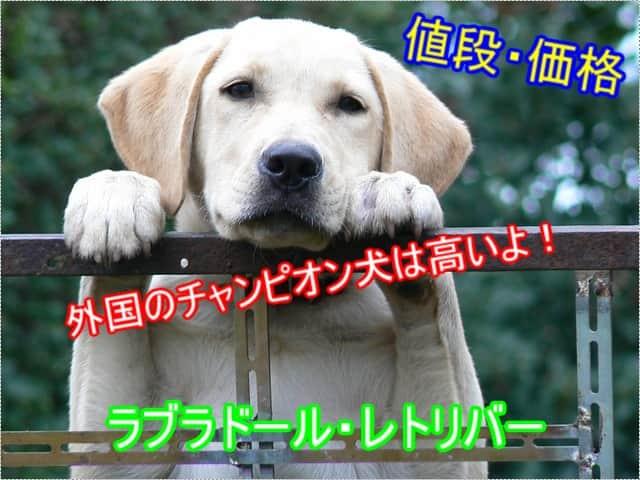 ラブラドールレトリバー・外国チャンピオン犬・値段・高い