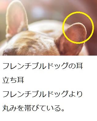 フレンチブルドッグの耳