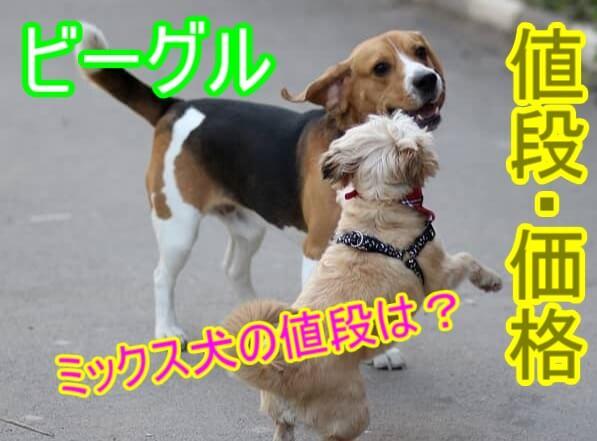 ビーグル-ミックス犬-値段-価格相場