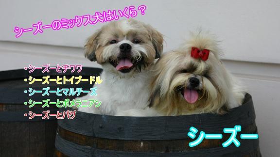 シーズー-ミックス犬-チワワ-トイプードル-マルチーズ-ポメラニアン-パグ-値段-価格