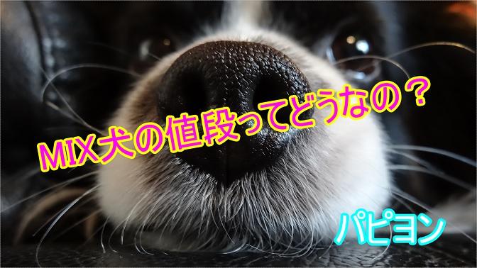 パピヨン-ミックス犬-値段-価格