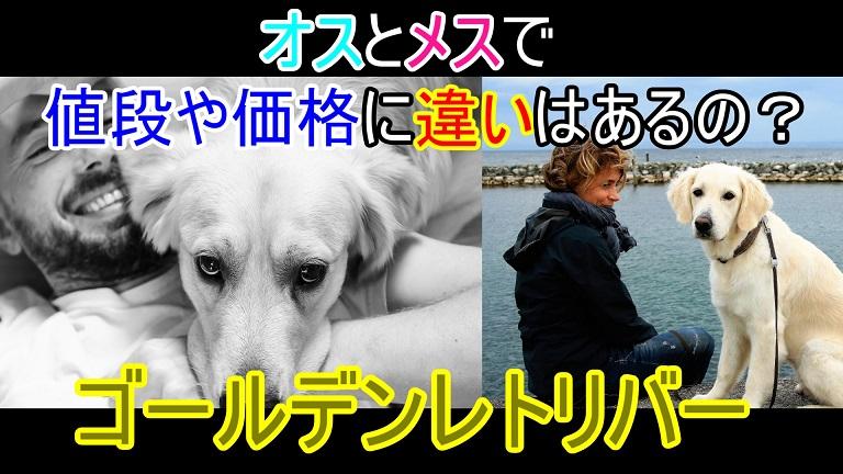 ゴールデンレトリバー-オス犬-メス犬-値段-価格-違い
