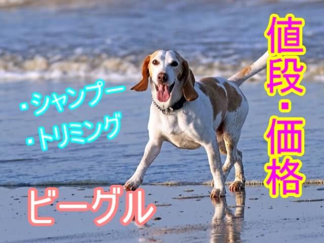 ビーグル-シャンプー・トリミング-料金