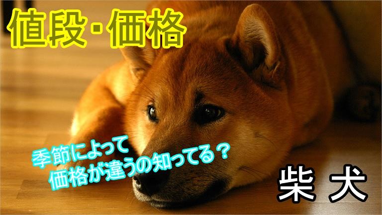 柴犬-季節によって値段や価格に違いがでる