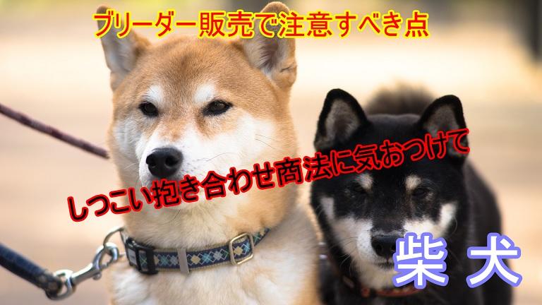柴犬-ブリーダー販売-注意点-詐欺-抱き合わせ商法