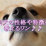 柴犬-性格-特徴