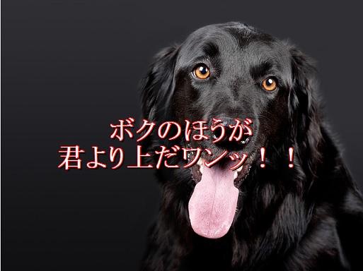 犬-腰振る-自分のほうが上