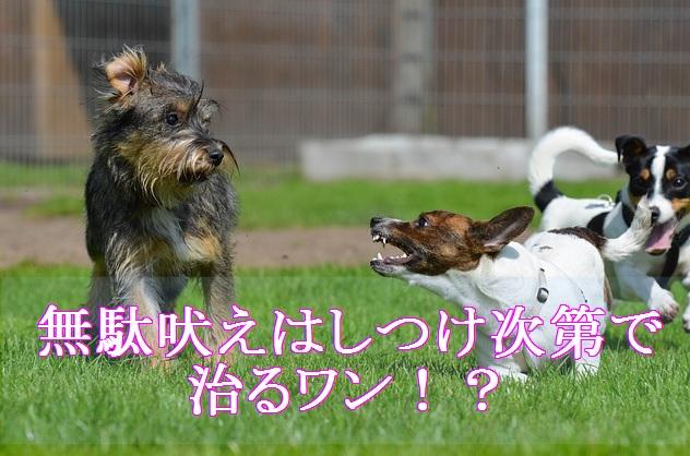小型犬-無駄吠えはしつけ次第で治る