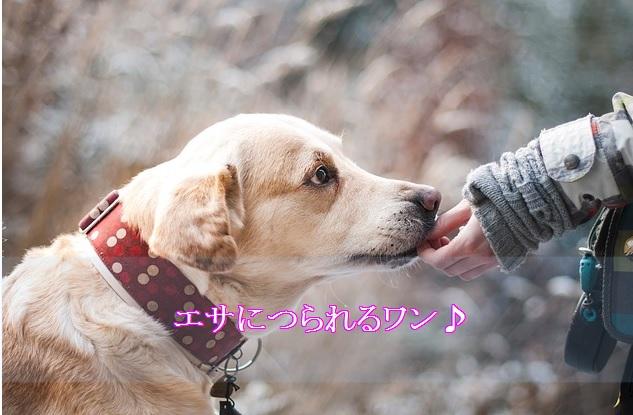 犬-吠える-黙らせる-餌付け対策