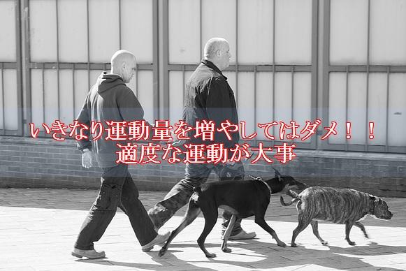 犬-ダイエット-運動量は適度に