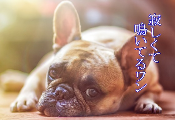 犬-夜泣き-原因-寂しさから