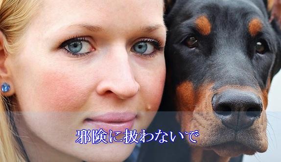 犬-夜泣き対策-コミュニケーションをとる