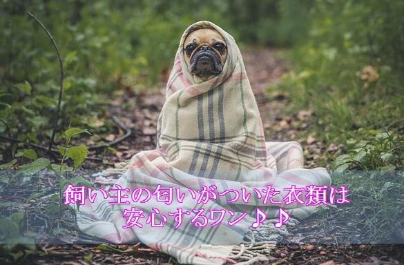 犬-夜泣き-対策-飼い主の匂いがついた衣類と時計
