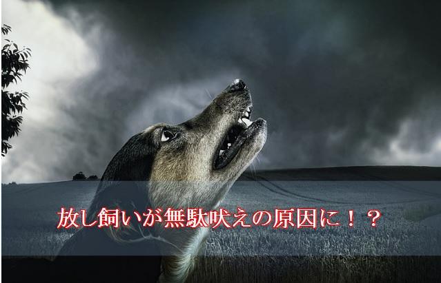 犬-吠える-放し飼いの危険性