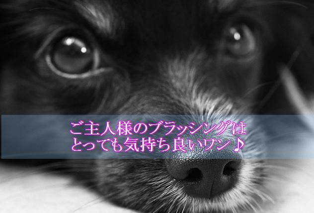 犬-ブラッシング