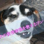 犬の愛情表現